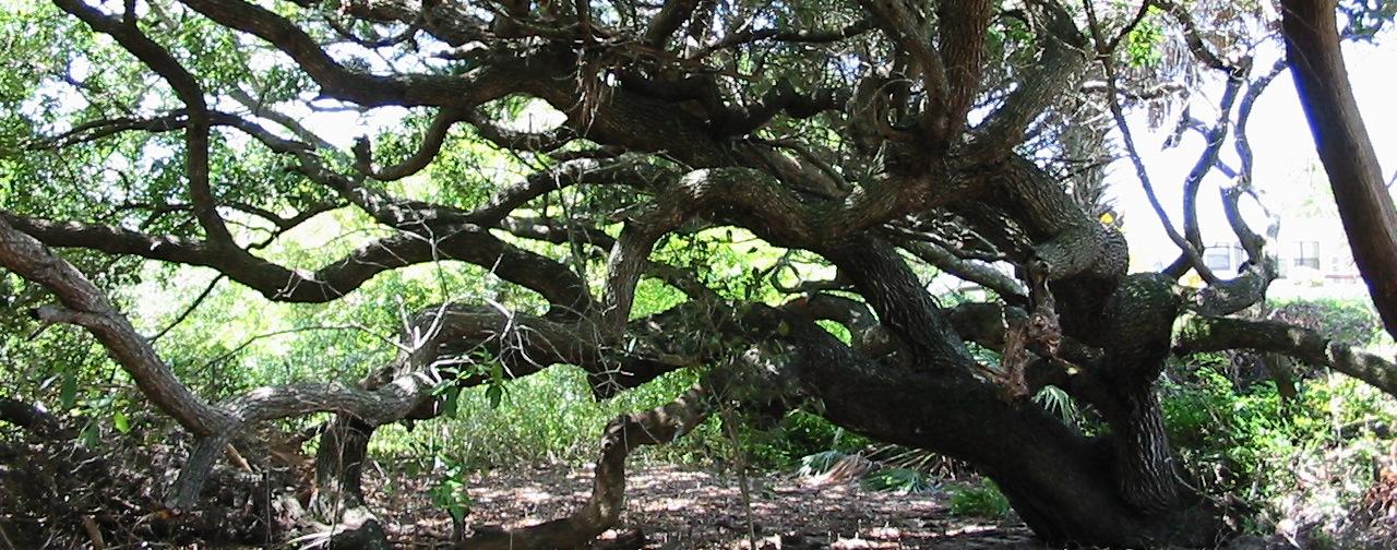 trees-crop-2.jpg