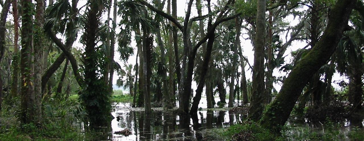 Wetland-crop-2.jpg