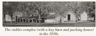 the stables complex with hay barn and packing house in the 1930's
