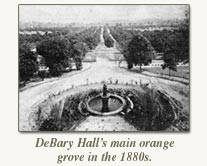 debary hall's main orange grove in the 1880's