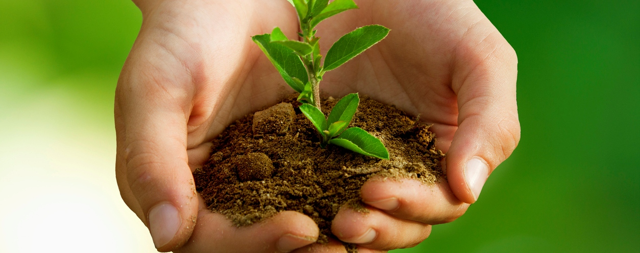 soil with small plant in the palm of hands photo
