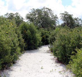 Photo of a Lyonia Preserve trail